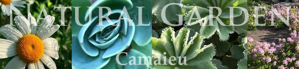 Camaieu Garden